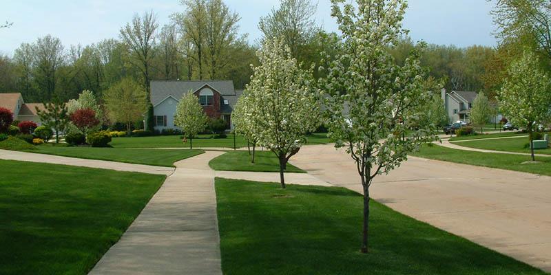 Street Tree Program City Of Mentor Ohio