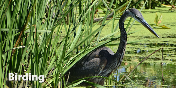 The Mentor Marsh area is a great place for birding.